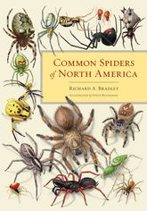 Common Spiders of North America$